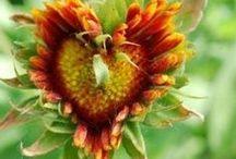 Sunflowers / by Bonnie Brock