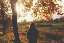 c r i s p / Fall leaves