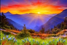 The splendor of the Lord / by Marie Ellis