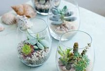 Terrariums / Simple or elaborate, terrariums are wonderful additions to decor and fun to create.