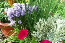Container Gardens / Garden anywhere in pots!