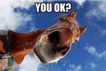 Horsin' Around ♘ / Funny horse pictures, equestrian ecards, and more to make you smile or laugh!