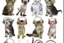 Cat Posters /  http://www.gbposters.com/view-all/cats-animals