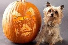 Dog O' Lantern / by Anskee Bowers