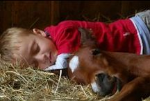 ✿ Cowboy Way of Life ✿ / Tough cowboys, little cowboys, famous horsemen and their horses!