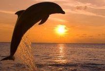 Florida ♡ / Sand, Sun, Fun... / by Shelly Bolea
