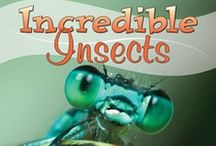 Incredible Insects / by Amanda Bennett Unit Studies