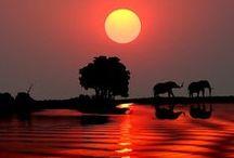 Save our elephants!