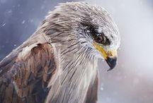Eagles & Falcons