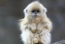 Monkey's & Apes