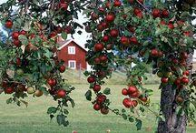 Nature Gardens Scandinavian