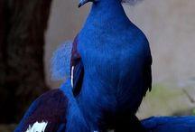 ▫️Nature Birds