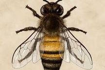 Beekeeping / Keeping bees