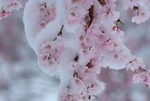 garden inspirations / by Cathy Walackas Estey