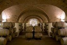 Our Winery / Vineyards and cellar of Marchesi Ginori Lisci winery