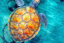 Ocean Mood / Discover ocean treasures with me.