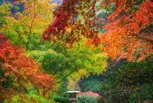 Fall / by Teresa Turner