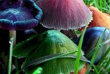 Fungi/Mushrooms/Toadstools / by Teresa Turner