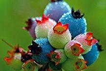 Beautiful Berries / by Teresa Turner