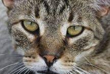 """Mis """"Animalitos"""" / Los q viven o vivieron conmigo y los q me gustaría q lo hicieran..."""