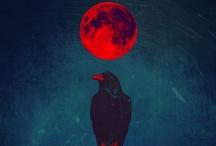 Black Birds / by Miranda Alvarado