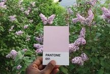 PANTONE  / by rin lucky13