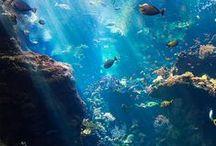 Ocean/Sea