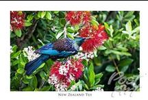 New Zealand Wildlife Postcards / New Zealand Wildlife Postcards