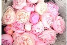 Home - Peonies+Macarons / by Tiffany Style Blog