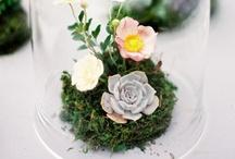Flora / by Riza Taylor