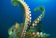 Marine Life / by MaduroDive