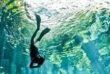 Scuba Diving  / by MaduroDive