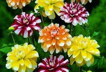 Flowers and Gardens / by Denise Stuart