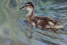 Duck art / Beautiful Duck art & photography