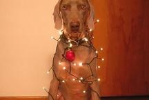 CHRISTMASSSSS!!!!!! / by Lara D'Antonio