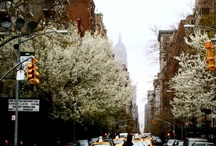 Everything New York! / My very favorite place! / by Lisa Martin