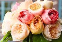Flowers / by Jolia Jolia