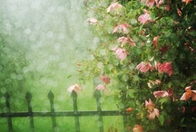 Rain ☆ه┊░ه┊░ه☆
