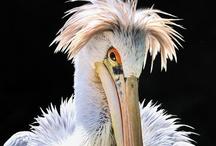 Beautiful Birds / Photos of beautiful birds!