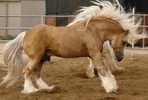 Horses / Beautiful, graceful and intelligent animals!