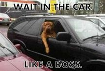 Dog Humor / Funny and cute dogs!
