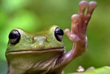 Frogs and other cold blooded critters