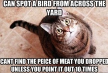 KITTY humor...and sometimes other pets