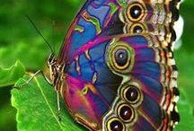 Butterflies and moths / No artist can create anything more beautiful than these!