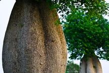 Trees / Photos of unusual or beautiful trees