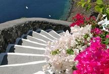 Stairways, Steps & Stairwells