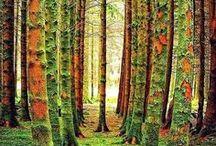 ♥ ARBOLES . . HOJAS y más ARBOLES ♥  /  Si supiera que el mundo se acaba mañana, yo, hoy todavía,                     plantaría un árbol. (M.L.K.)                                                                      / by CUTUFLINA