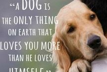 Dog's World / advice, diy and ideas for man's best friend