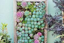 Garden: walls