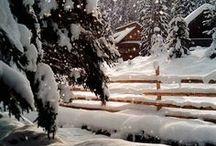 Seasonal - Winter / by Laura Jensen